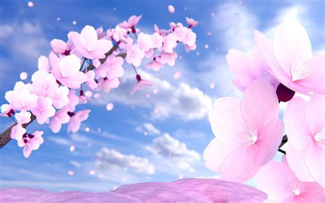 Anime Cherry Blossom Wallpaper - anime cherry blossom 80 wallpapers adorable wallpapers