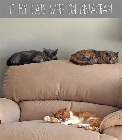 If My Cats Were On Instagram  Rainstorms And Love Notes