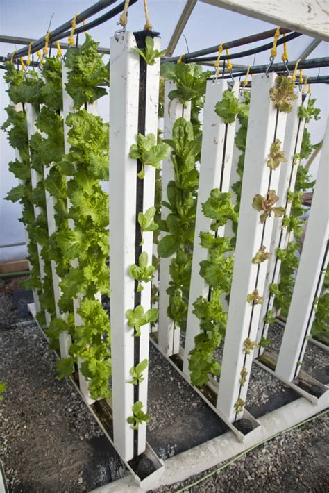 Vertical Garden Lettuce by Recirculating And Flow To Waste Hydroponics