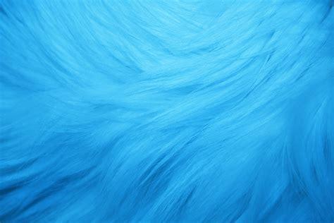 Free photo: Blue Texture Animal Bird Blue Free