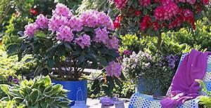 Quel Arbre Planter Près D Une Maison : am nagez une haie d 39 arbustes en pot jardinerie truffaut ~ Dode.kayakingforconservation.com Idées de Décoration
