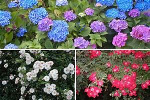 Couvre Sol Vivace : les plantes couvre sol astuces bricolage ~ Premium-room.com Idées de Décoration
