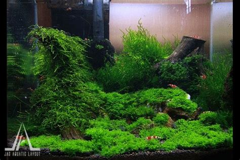 shrimp tank aquascape moss nano aquascape nano shrimp tank