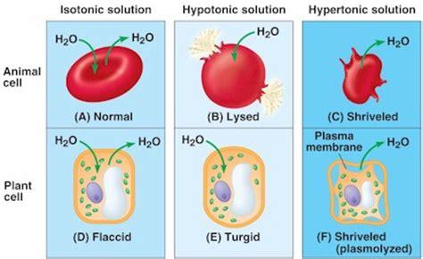 biology hypotonic hypertonic isotonic driverlayer search