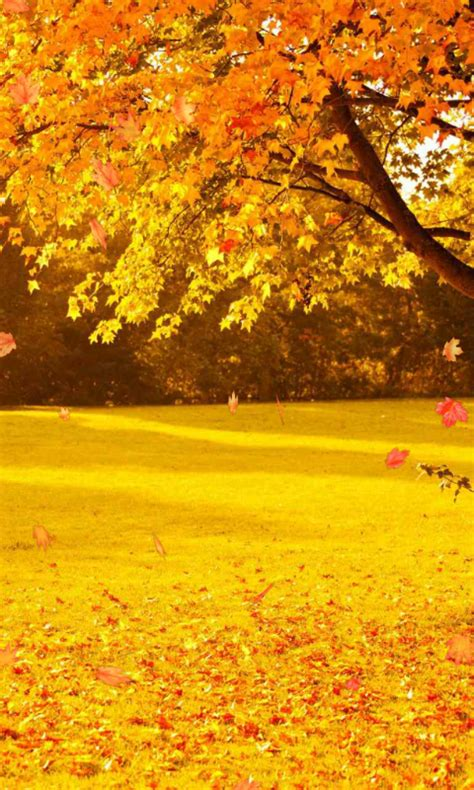 Autumn Themed Wallpapers For Android by Autumn Wallpaper Appstore For Android