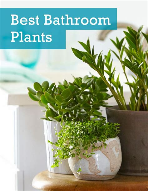 houseplants   thrive