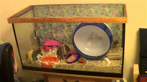 aquarium für hamster how to make a mesh top for a hamster gerbil tank