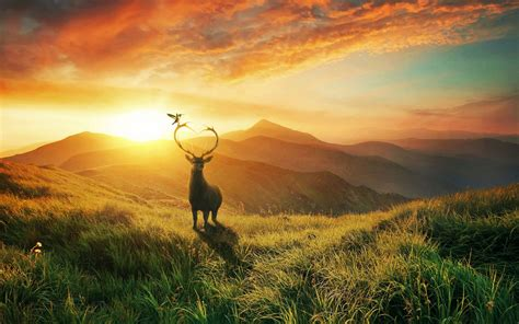 landscape sunset deer mountains bird desktop wallpapers