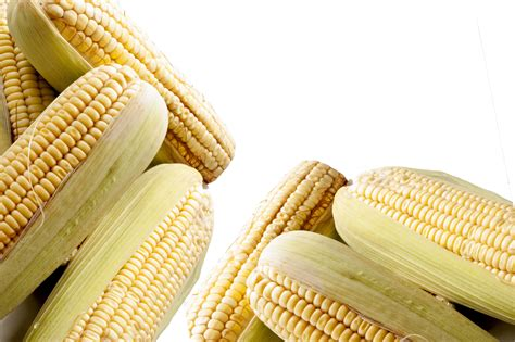 Climate change to end maize production in Africa | The New ...