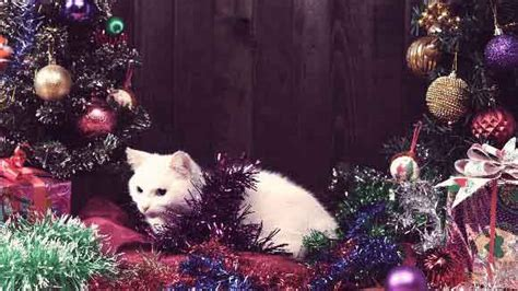 a cat proof christmas tree it is possible petcarerx