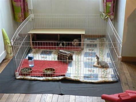enclos int 233 rieur cochon d inde hamsters cochons d inde lapins forum animaux