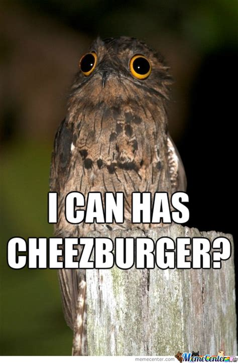 Potoo Meme - the potoo nature s most surprised looking bird lazer horse