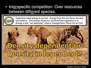 Ecology, Competition Lesson PowerPoint, Competitive Exclusion