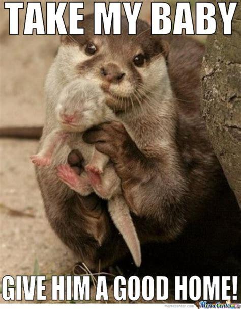 Baby Animal Memes Hilarious Baby Animal Memes Www Pixshark Images