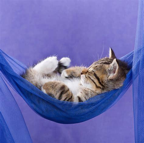 Kitten In A Hammock by Hammock Animal Stock Photos Kimballstock