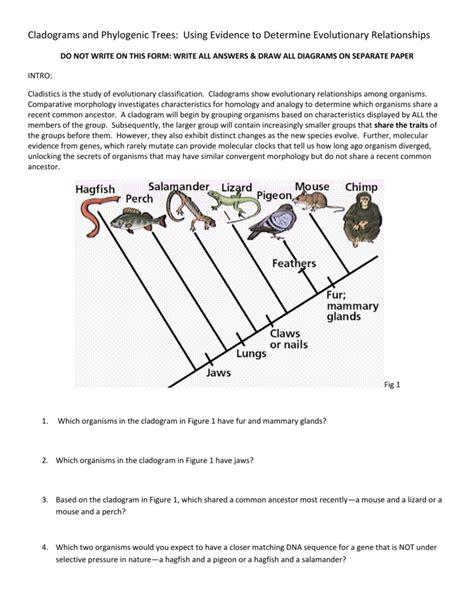 Worksheet Cladogram Worksheet Answers Grass Fedjp Worksheet Study Site