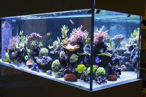 aquarium de 28 images barcelona s 10 most visited tourist attractions friendly rentals l