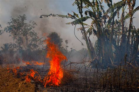 In The Amazon's Fire Season, 'You Either Burn Or You ...
