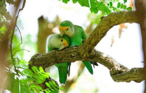 beautiful love birds pictures incredible snaps