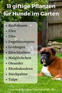 Schneckenkorn Giftig Für Hunde : ist kirschlorbeer giftig f r hunde ~ Lizthompson.info Haus und Dekorationen