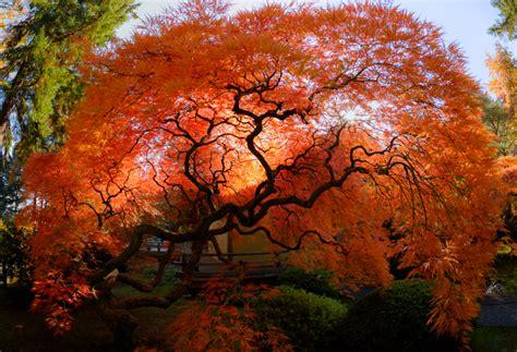 fall at portland japanese garden the clicks