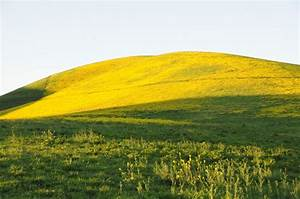 Hillside of mustard grass by DHaupt (Photo) | Weather ...
