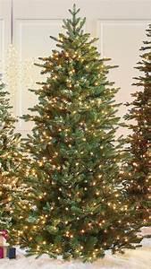 Aspen, Pine, Tree