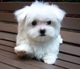 cute small dog breeds that don t shed clothes dog breeds