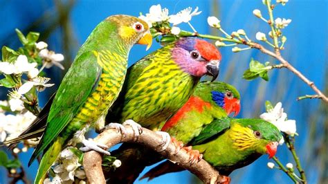 all pet birds prices in india parrots and parakeets