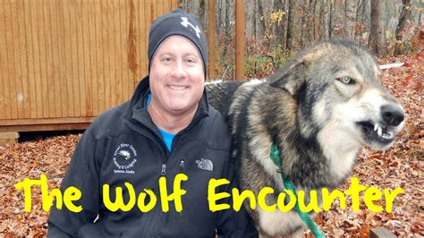 Wolf Encounter North Georgia Zoo Wolf Encounter Youtube