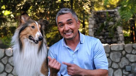 dog whisperer national geographic channel canada