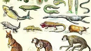 The origin of species? - RNA-only genes
