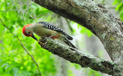 woodwork how to stop woodpecker from pecking house pdf plans