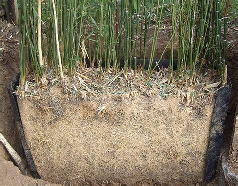 tailler bambou en pot haie masquante de faible largeur 45 messages page 3