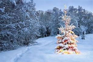beautiful christmas tree in snow photograph by boon mee