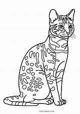 Coloring Cat Pages Printable Cool2bkids sketch template