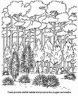 Forest Coloring Pages Habitat Trees sketch template