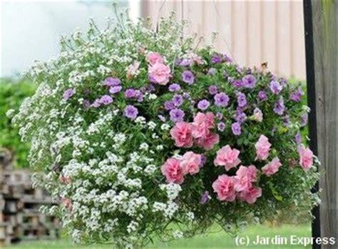 5 compositions pour une jardini 232 re fleurie l 233 t 233 prochain composition