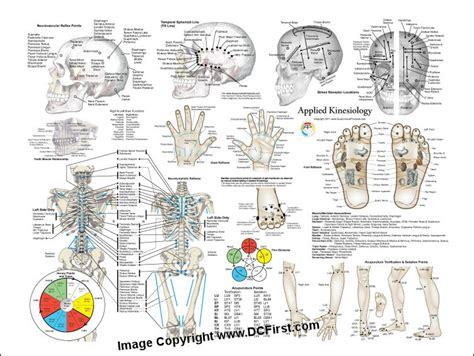 Kinesiology Muscle Testing Chart