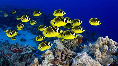 Top 50 Beautiful【fish】facts & Photos Colorful Wallpapers