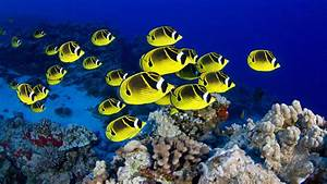 Top 【50】 Beautiful FISH Photos Colorful Image HQ Wallpapers