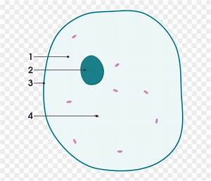 Simple Animal Cell Diagram Blank