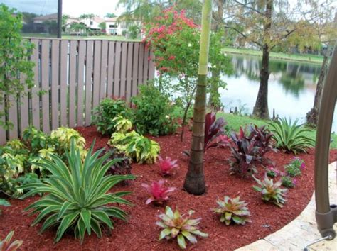 small tropical trees create your own tropical garden