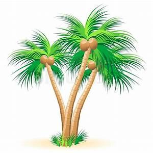 Tropical palm trees Vector | Stock Vector | Colourbox