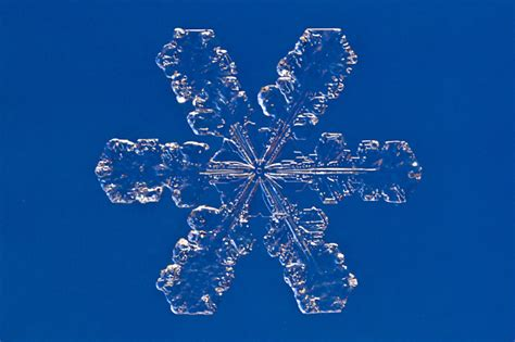 collect preserve   snowflakes science friday