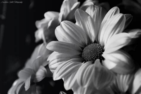 ccd blackwhite floral black and white flower more on myphotographywithjoy