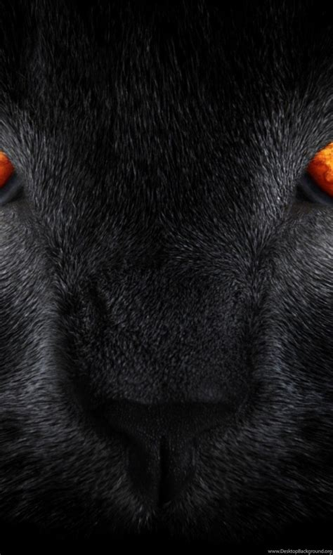 Orange Eye Wallpaper by Wallpapers Tiger Eye Homepage Cat Black Orange