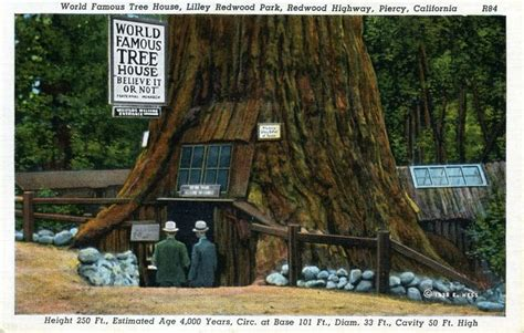 tree house hotel redwood forest giant redwood tree house home sweet home someday pinterest