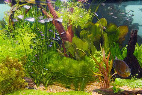 live plants in community aquariums lighting requirements