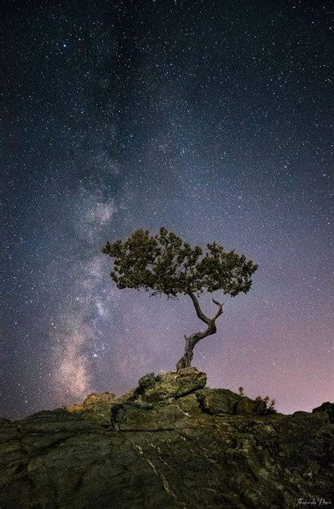 ~~vertical Milky Way And A Lone Tree By Thrasivoulos